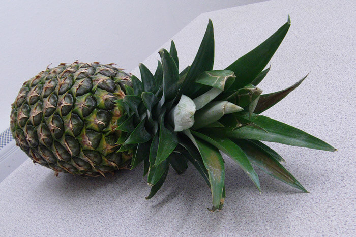 Pineapple Allyl Hexanoate